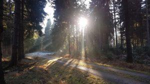 20161221_10breitewaldwege