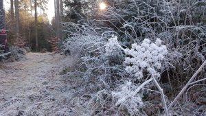 Tag der Wintersonnenwende-der Frost hat uns im Griff